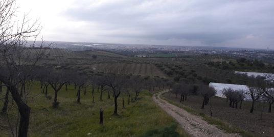 Terreno con alberi di mandorle e frutta
